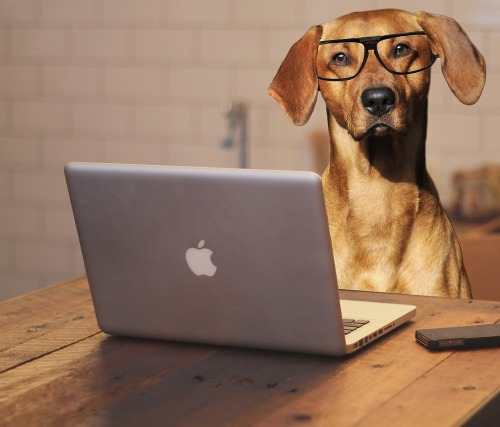 dog-2983021_1280