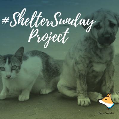 ShelterProject